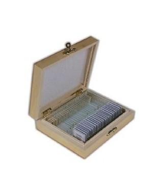 TSMDP100 --  Vetrini preparati per il microscopio (100 pz)